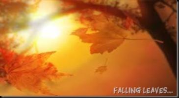 Autumn SunThrough Leaves