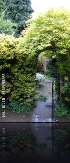 Archway, Jasmine covered