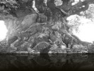 tree carvings 2